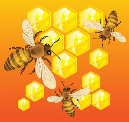 Bees do honey in honeycombs inside of beehive, vector illustration Vector