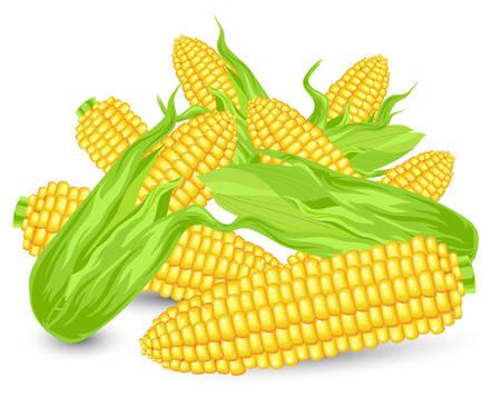 corn ear: Hill Orejas de ma�z maduro, la agricultura, cultivo cosechado, ilustraci�n