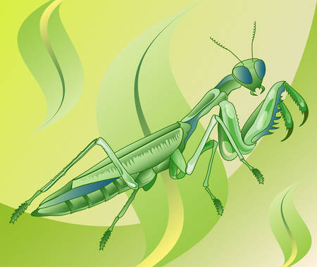 mantis: Insect mantis is going eat in grass, illustration