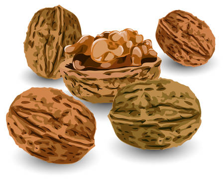 walnut: Hill of nuts ripe, crop reaped in autumn, illustration Illustration
