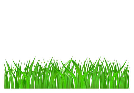 sod: Green grass isolated on white background, vector illustration Illustration