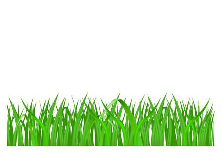 Green grass isolated on white background, vector illustration Illustration