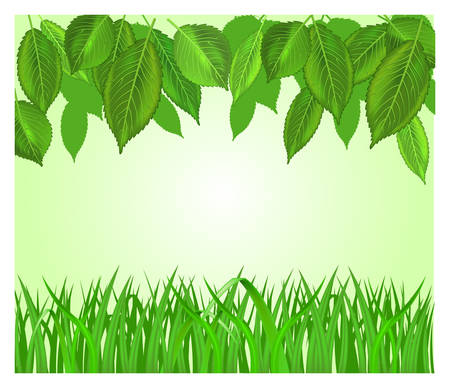 fertile: Vector background with leaf and grass in white color, illustration Illustration