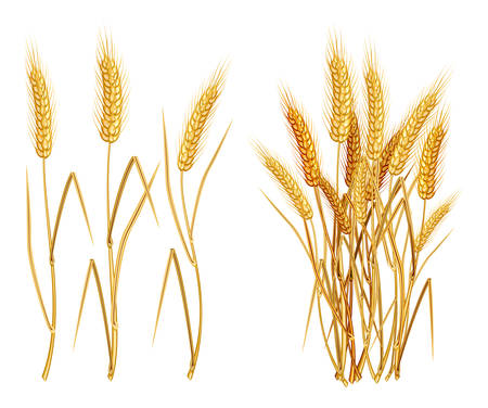 keep up: Ripe yellow wheat ears, agricultural vector illustration