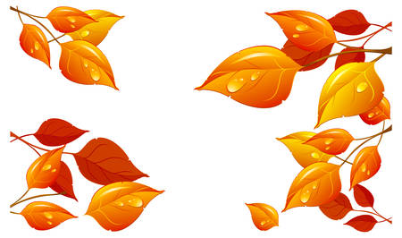 Leaves and rain drops in beautiful autumn colours on white background, vector illustration Vector