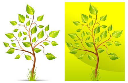 sycamore leaf: Green trees with grass on white and green background, vector illustration