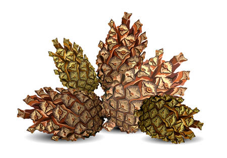 Hill of pine cones isolated on white background, vector illustration