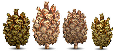 Four pine cones isolated on white background, vector illustration