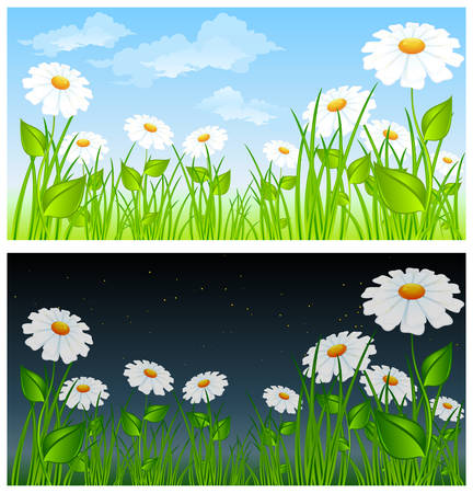 Field of daisies and cloudy sky, day and night. Vector