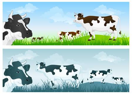 calas blancas: Blanco vaca con puntos negros en pasturas de hierba verde en el cielo azul