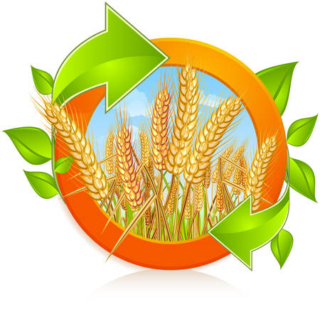 wheat illustration: Circle with ripe yellow wheat ears with green arrows