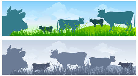 husbandry: Monochrome cow silhouettes on green grass pasture over blue sky