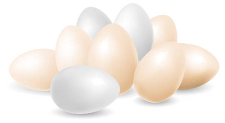 intacto: White and yellow eggs isolated on background