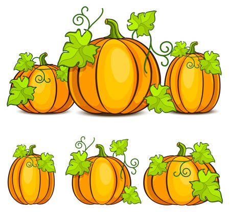 fall harvest: Yellow pumpkins witn green leaves, Halloween vector illustration Illustration