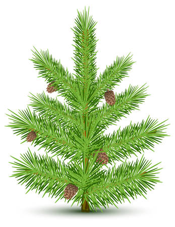 Cones on green christmas fur-tree. Isolated object on white. Vector illustration Vector