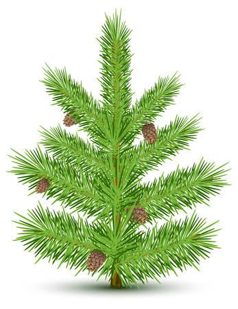 Cones on green christmas fur-tree. Isolated object on white. Vector illustration Illusztráció