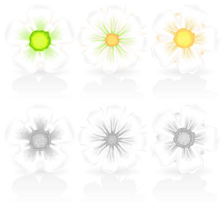 beautify: white spring flowers with delicate colour hue