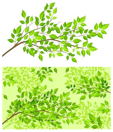branch tree: branch tree with green leaf on white background illustration  Illustration