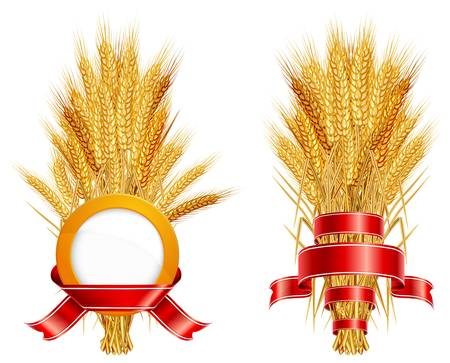 thresh: Ripe yellow wheat ears with red ribbon, agricultural illustration