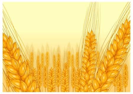 agrario: trigo maduro o�do sobre fondo amarillo, ilustraci�n vectorial agr�cola