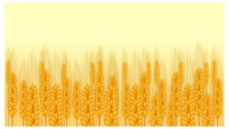 agrario: trigo maduro o�do sobre fondo amarillo