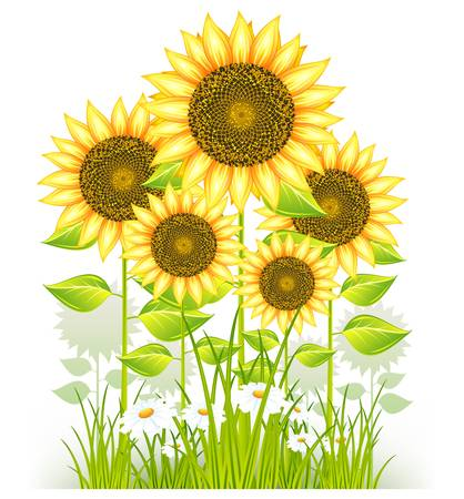 big flower yellow sunflowers and grass Stock Vector - 9672820