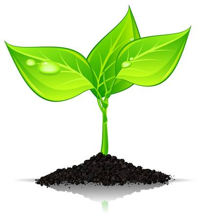 develop: Green plant with drops of water in ground hill over white, vector illustration Illustration