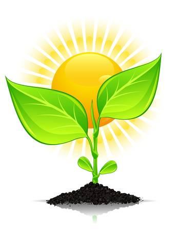 sprout growth: Green plant with drops of water in ground hill and sun over white, vector illustration