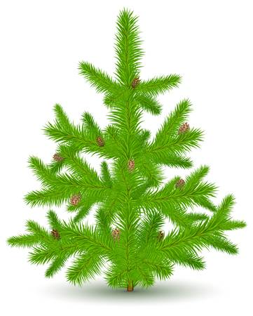 green Christmas fur-tree with cones, isolated object on white, vector illustration  Vector