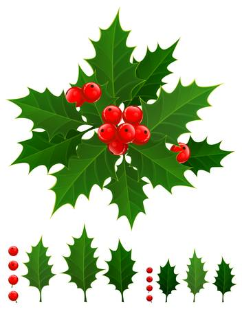 Christmas branch of holly berries and green leaves, vector illustration