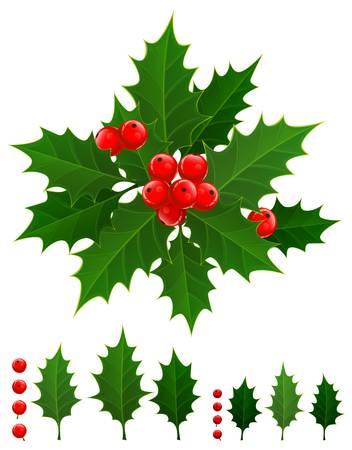 hulst: Kerst tak van hulst bessen en groene bladeren, vector illustration