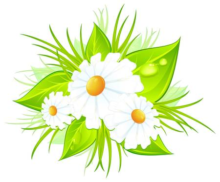 Bouquet of white daisies and green leaves, vector illustration Vector