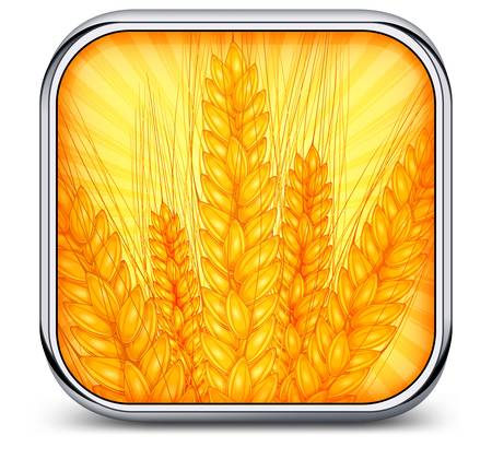 Square metal icon with ripe ear wheat, agricultural vector illustration