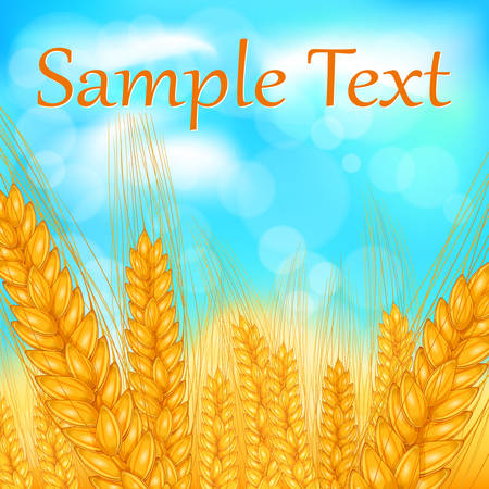 Ripe ear wheat field with blue sky, agricultural vector illustration Vector