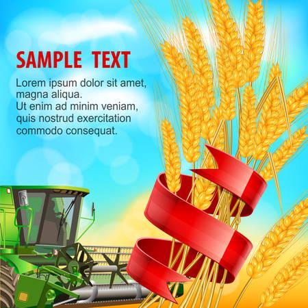 agrario: Espiga de trigo madura con cinta roja Vectores