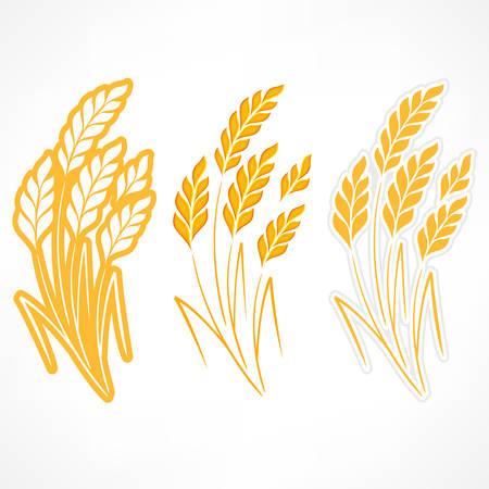 agrario: Orejas estilizadas de trigo sobre fondo blanco, ilustraci�n vectorial agr�cola