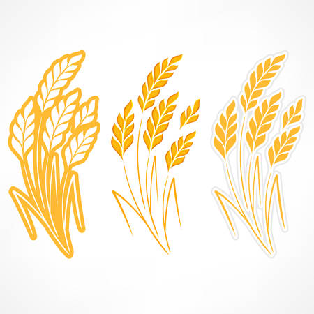 agrarian: Stylized ears of wheat on white, agricultural vector illustration