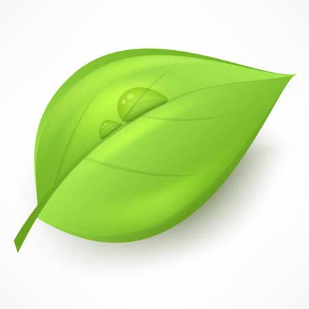 Groen blad met een druppel water op een witte, vector illustratie.