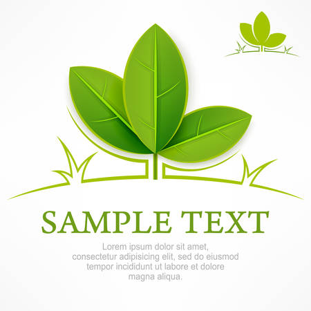 leaf logo: Design elements, branch with green leaves & text, vector illustration Illustration