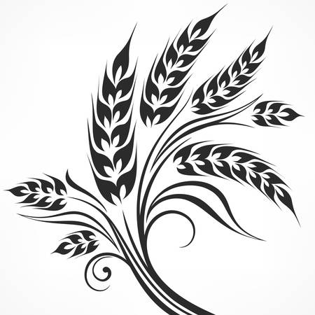 Stylized ears of wheat in black on white, vector illustration Çizim