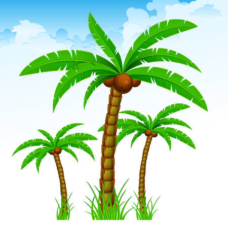 Tropical palm trees with green leaves and coconuts again blue sky. Vector illustration