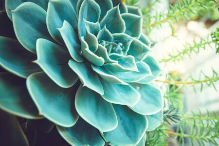 home decor big leaf cactus succulent plant