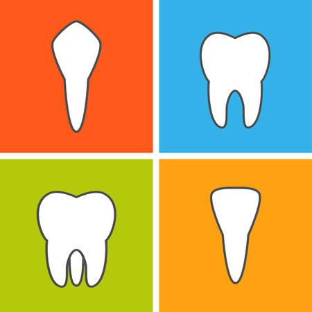 Tooth types. Dental vector illustration. Flat outline Иллюстрация