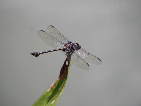 dragon fly: Dragon fly on top of a leaf Stock Photo