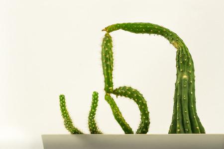 odd: Cactus with an odd shape