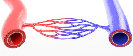 La rete vascolare dell'essere umano - Rendering 3D