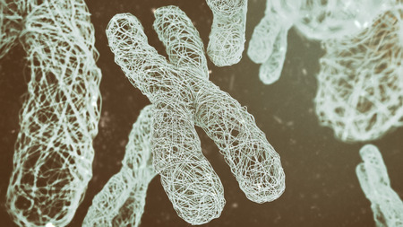 XY Chromosomes - Close-up - 3D Rendering