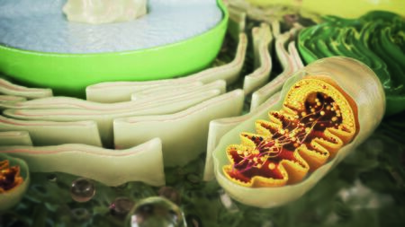 mitochondrion in a cell organism -- 3D Rendering