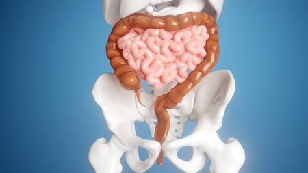 Human digestive organs with blue background- 3d rendering