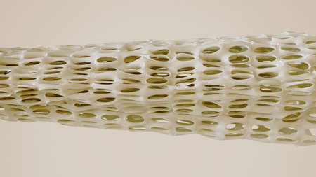 Bone spongy structure illustration - 3D Rendering